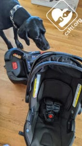 Britax B-Safe Gen2 with review dog